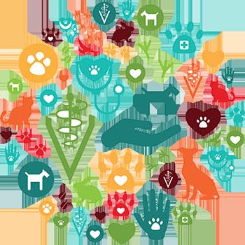 Holistic New Hampshire Holistic Animal Care
